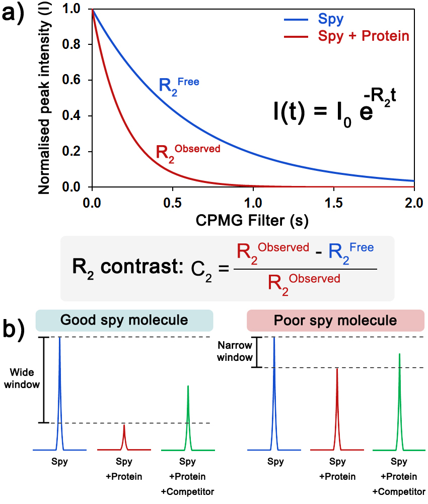 Fig. 2  Evaluation of the sensitivity of a spy molecule. (a) Measurement of the transverse relaxation rate (R2) of the spy molecule in the absence (blue) and the presence of protein (red). The C2 quantifies the extent of the shift in R2 in the presence of protein. (b) Upon addition of protein, the 19F CPMG signal of a good spy molecule (left) is greatly reduced, resulting in a large window to detect and rank displacers, while for a poor spy molecule (right), the difference between the signals is too small.