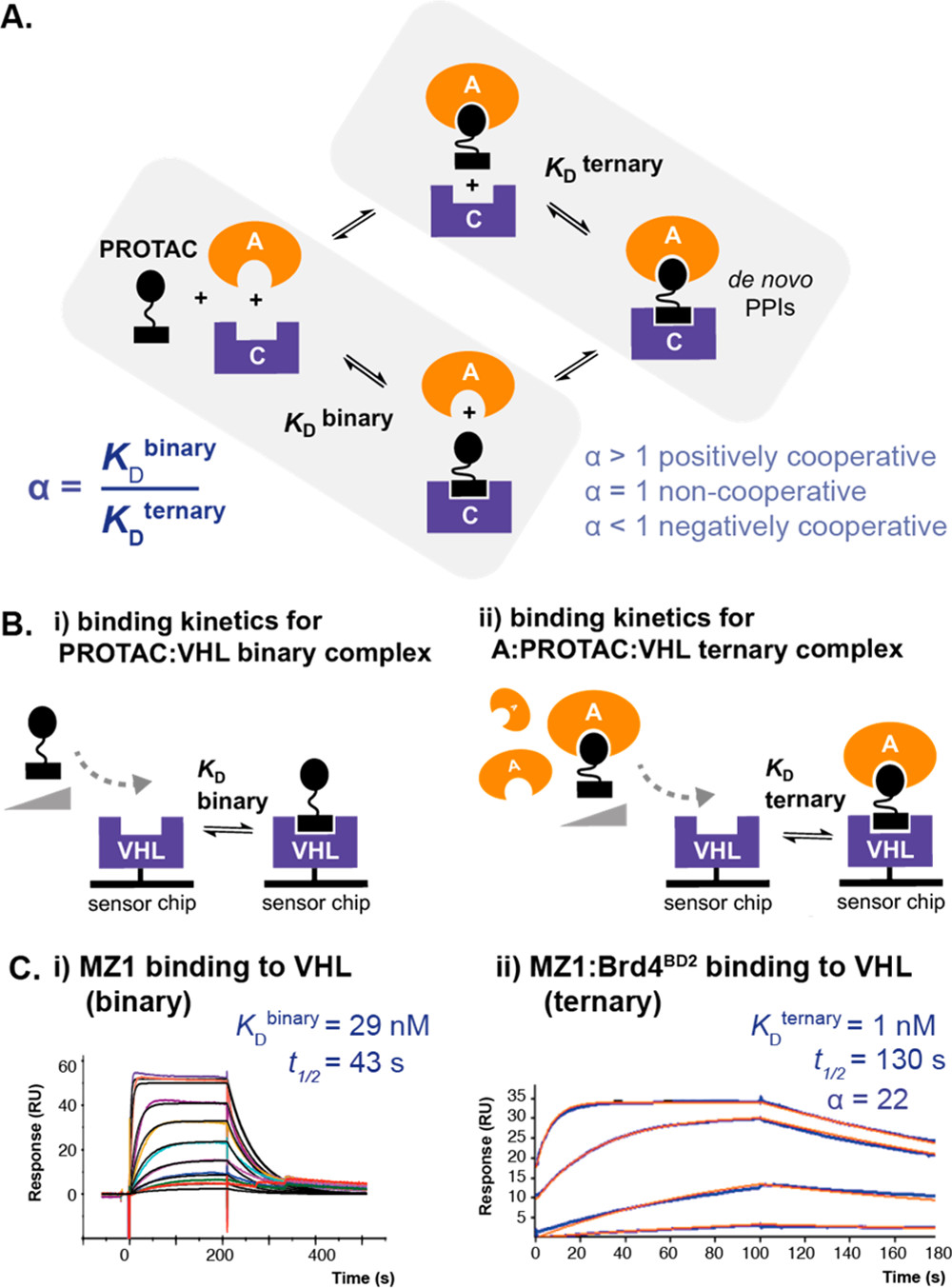 Figure 1. Schematic and binding data illustrating our SPR approach for measuring binding kinetics and determining cooperativity (α) for PROTAC binary and ternary complex formation.