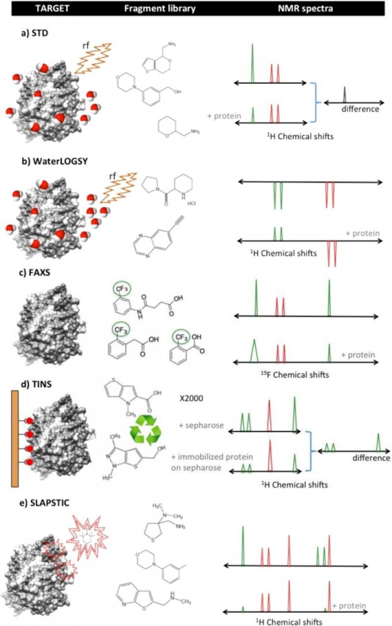 ubiquitin structure research paper Linking ubiquitin research to drug (2017) structure-guided development of a potent and seminal paper associating the targeting of usp30 to the.