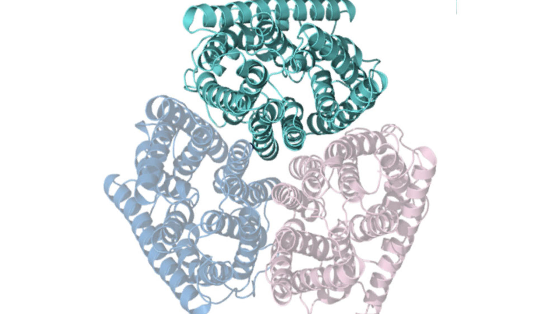 Graphic representation of Amt protein