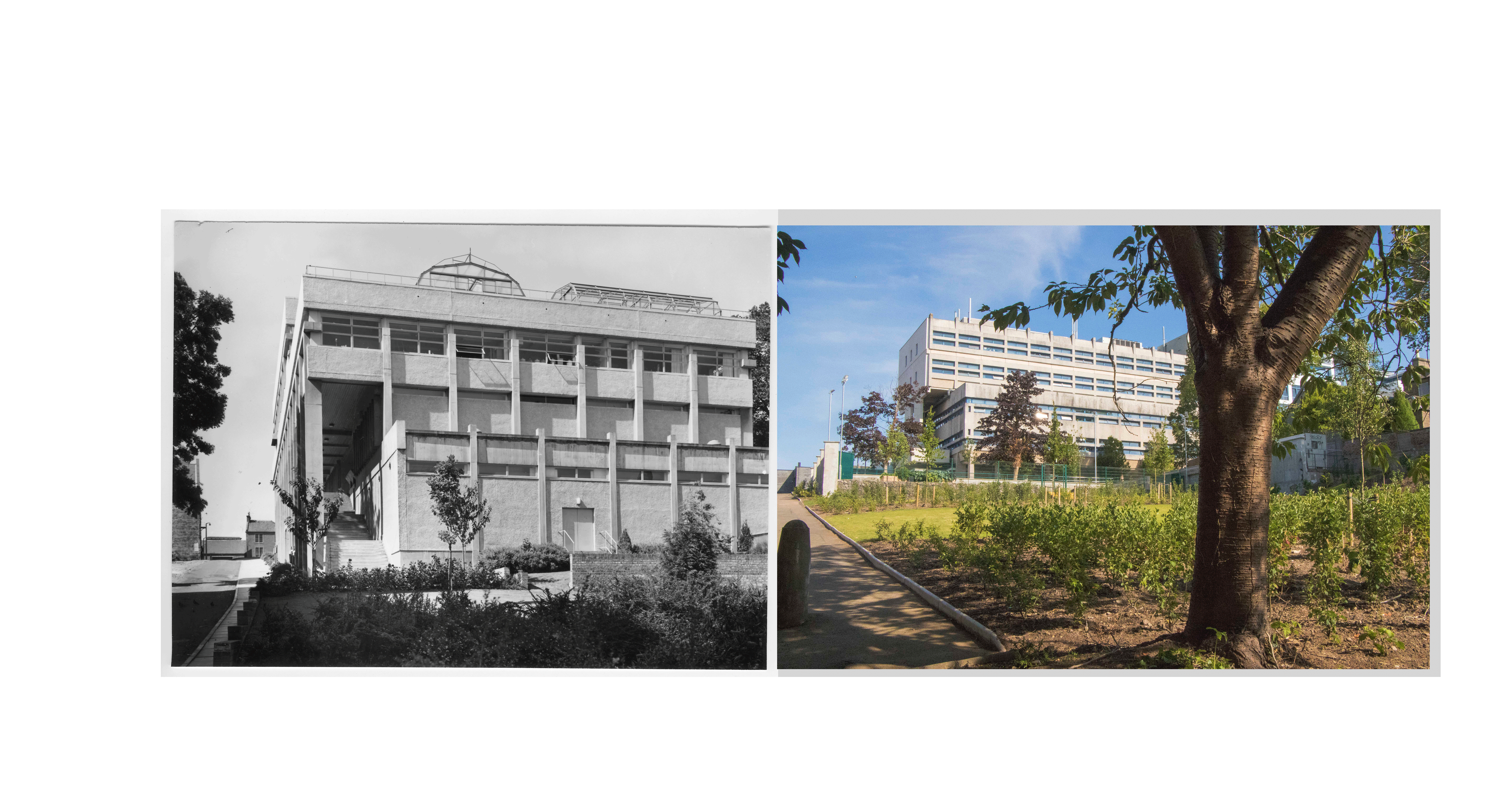 Past and Present - The Biological Sciences Institute and the allotments and edible garden that have replaced it.