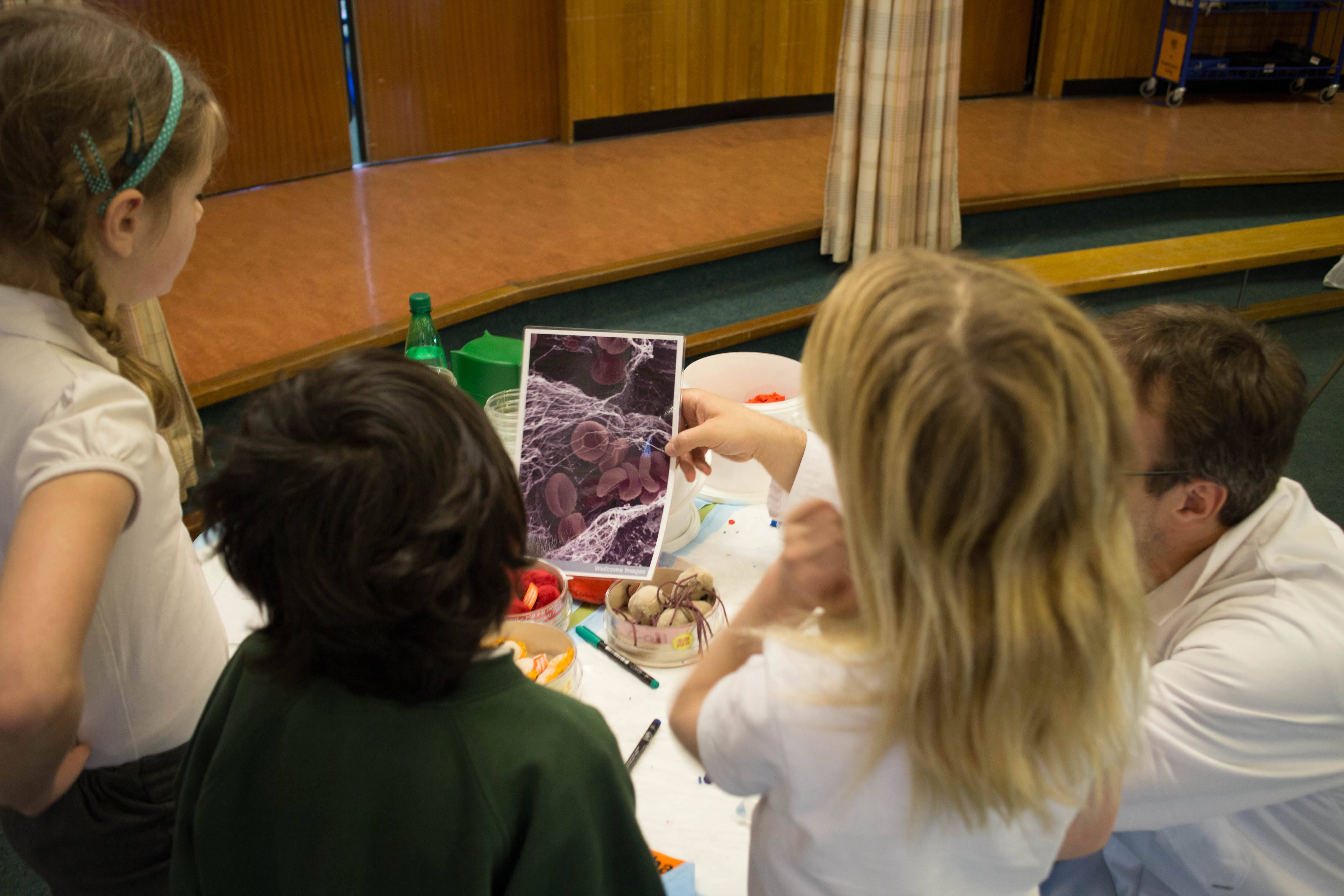 Students observe red blood cells