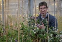 Dr Ingo Hein in a greenhouse with potato plants (image credit: Roger Hyam)