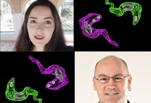 Clockwise from top left: Joana Faria, Trypanosomes, David Horn, Trypanosomes