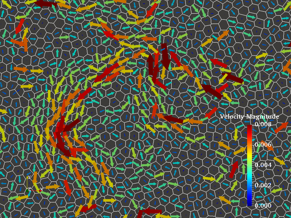 Velocity fields in simulated cell sheets - SPV model simulation at τ = 200, cell outlines in white